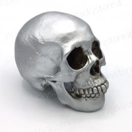 Cranio anatomico decorativo - In vetroresina