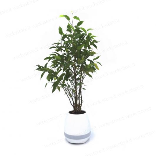 Vaso lampada hi-tech - bluetooth